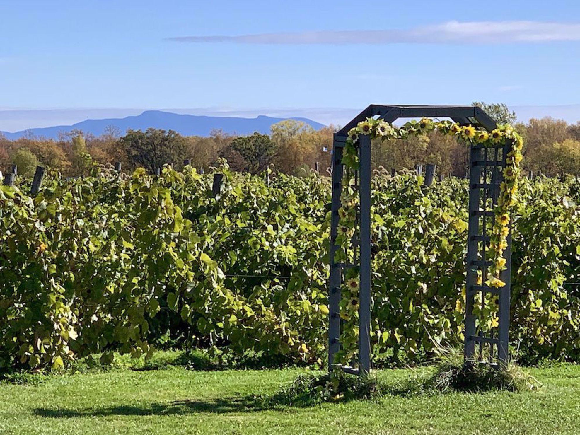 Vines, arbor, mountains