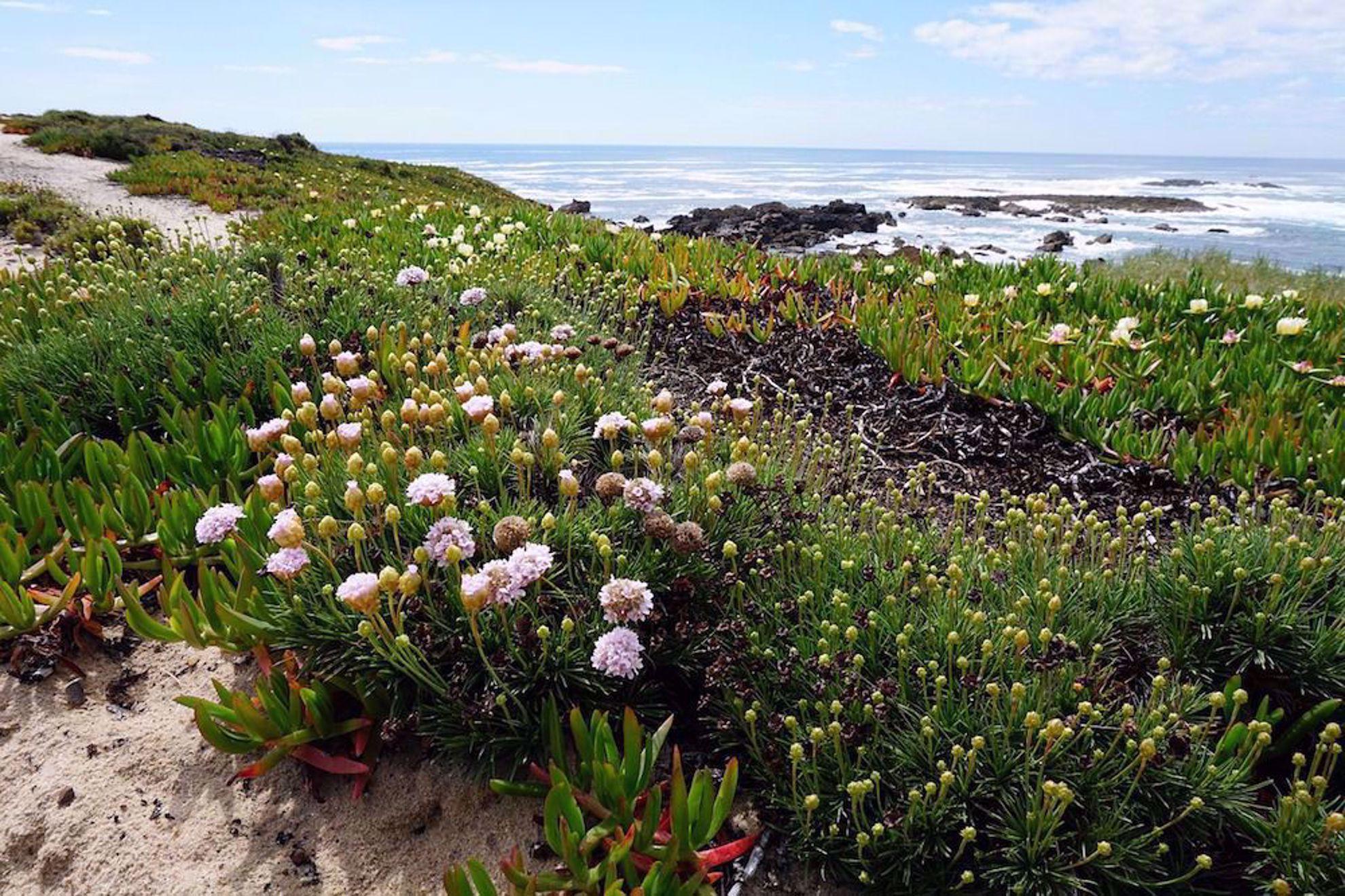 Flowers on coast Portugal