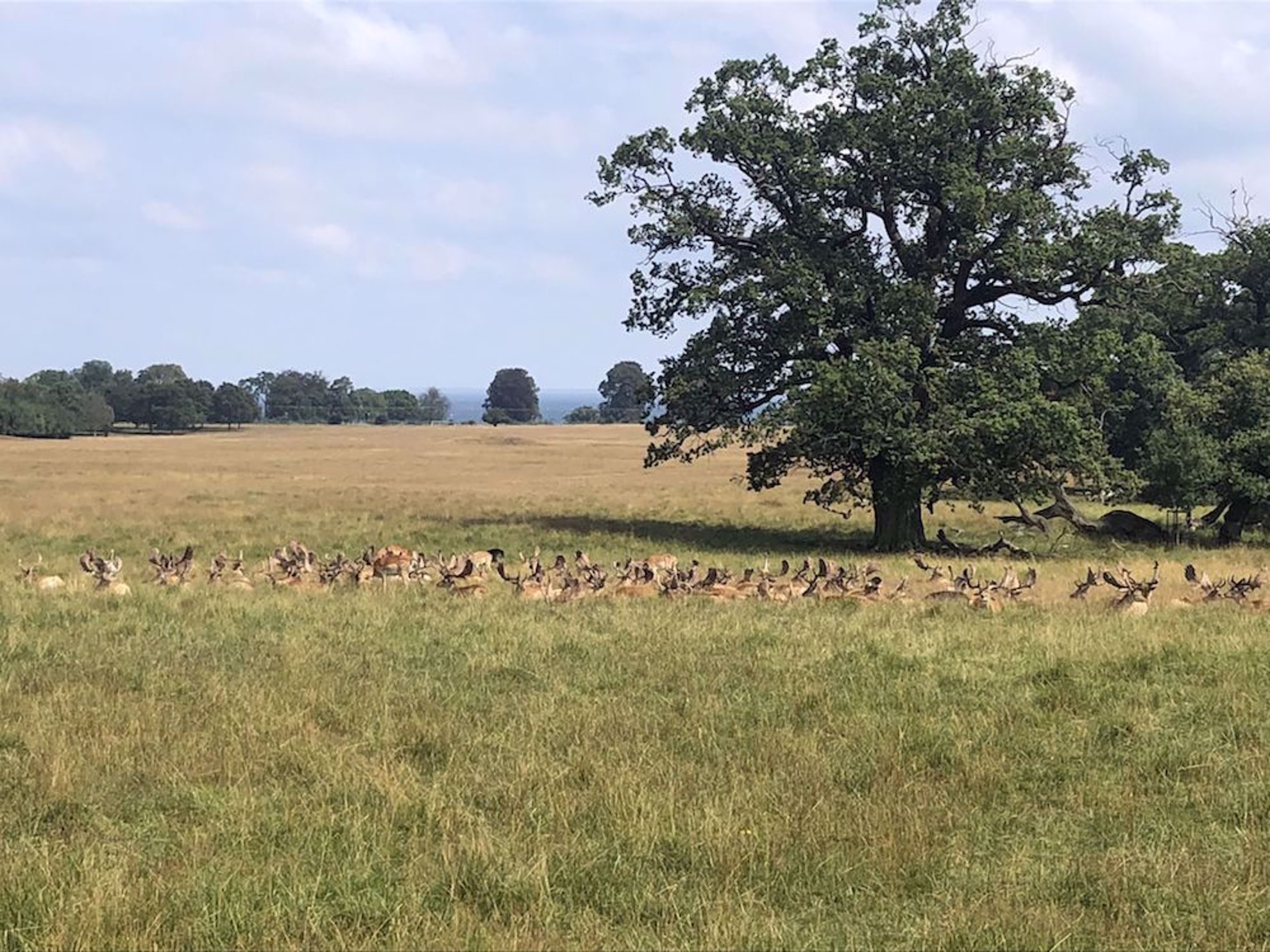Herd of deer in park in Dyrehaven, Denmark