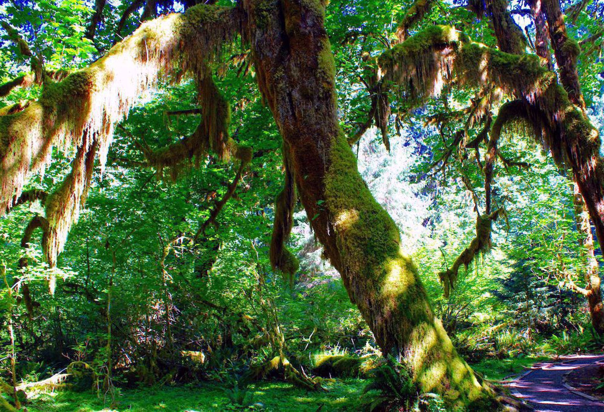 Mossy trees in Forks