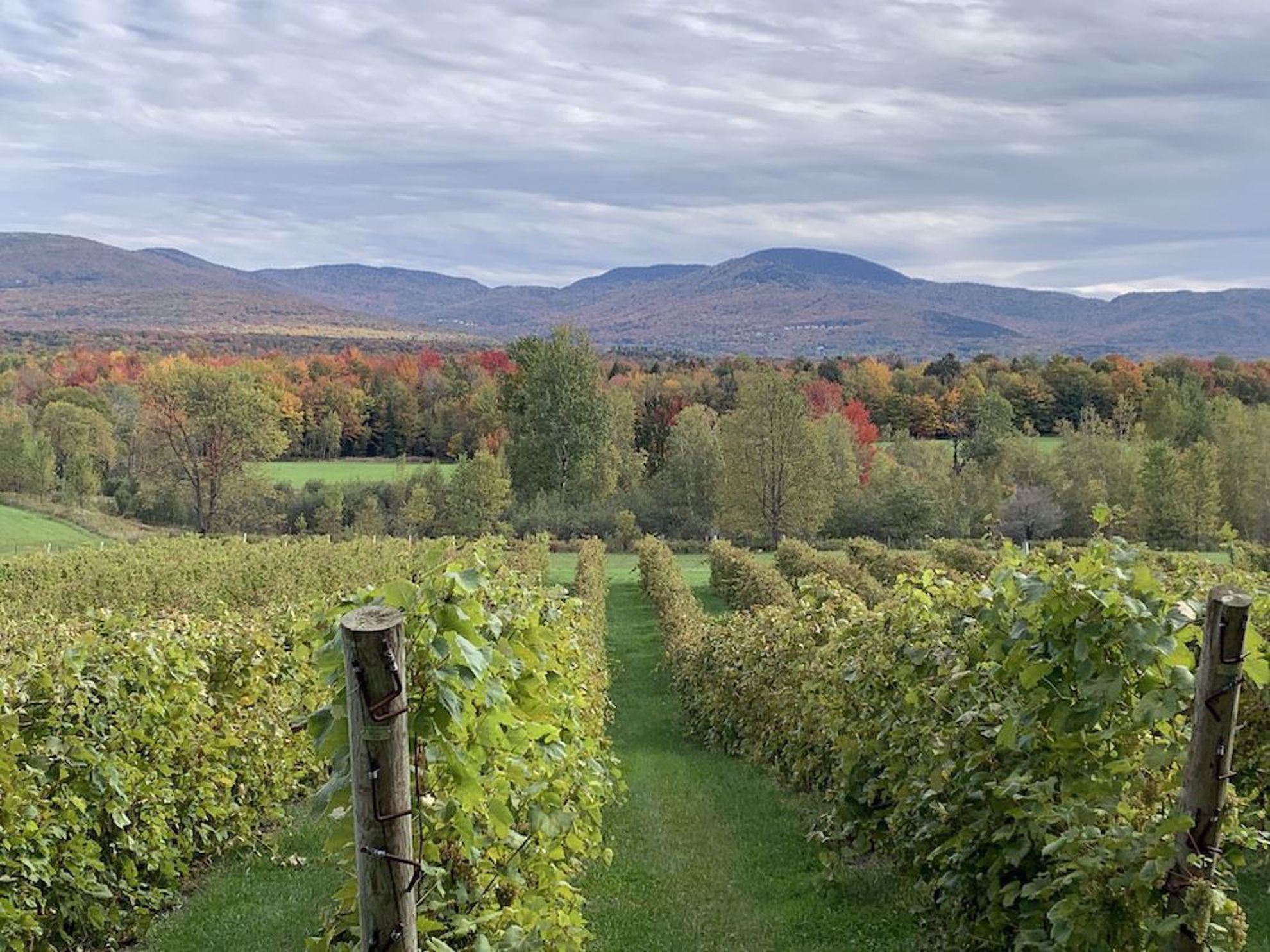 Fall colors over vineyard