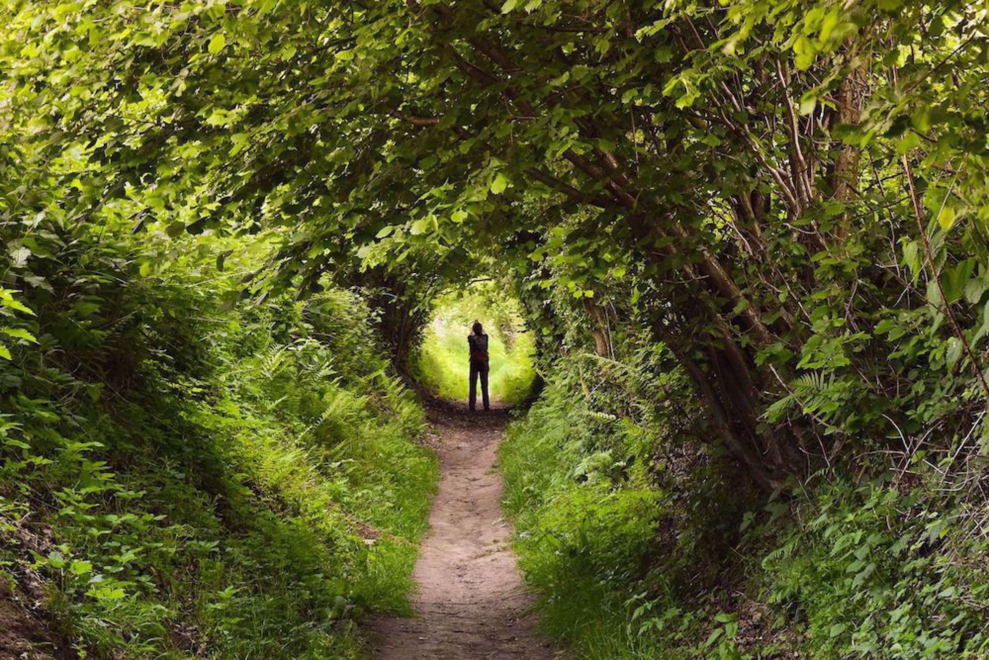 Hiking in green tunnel