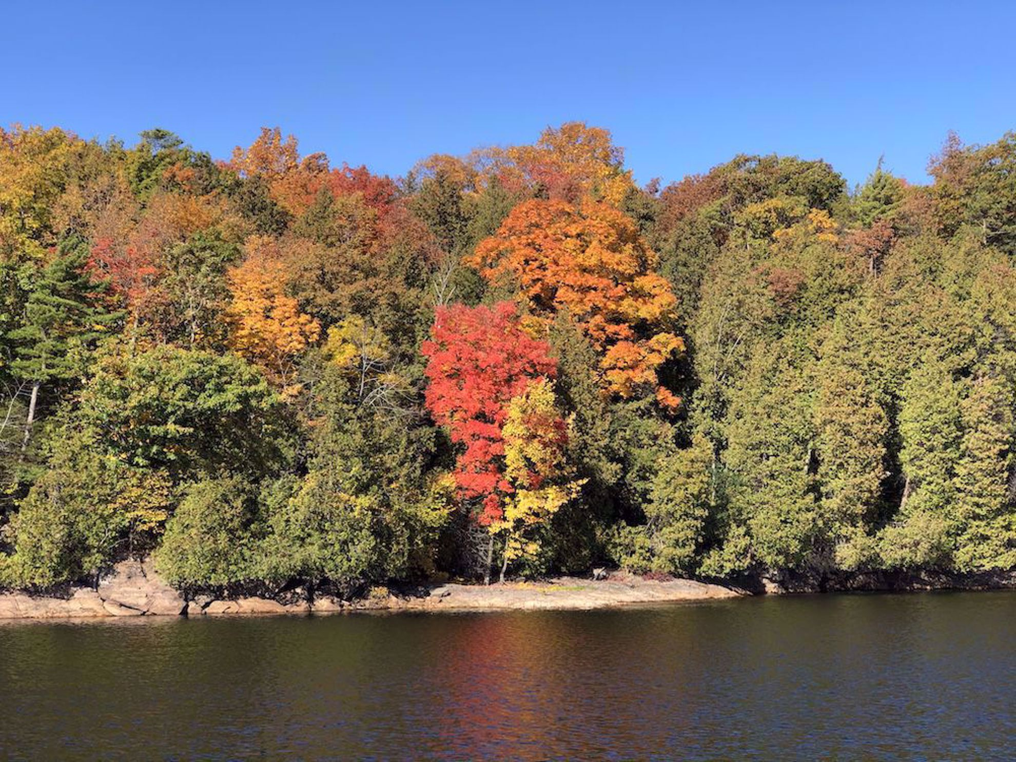 fall colors along lake