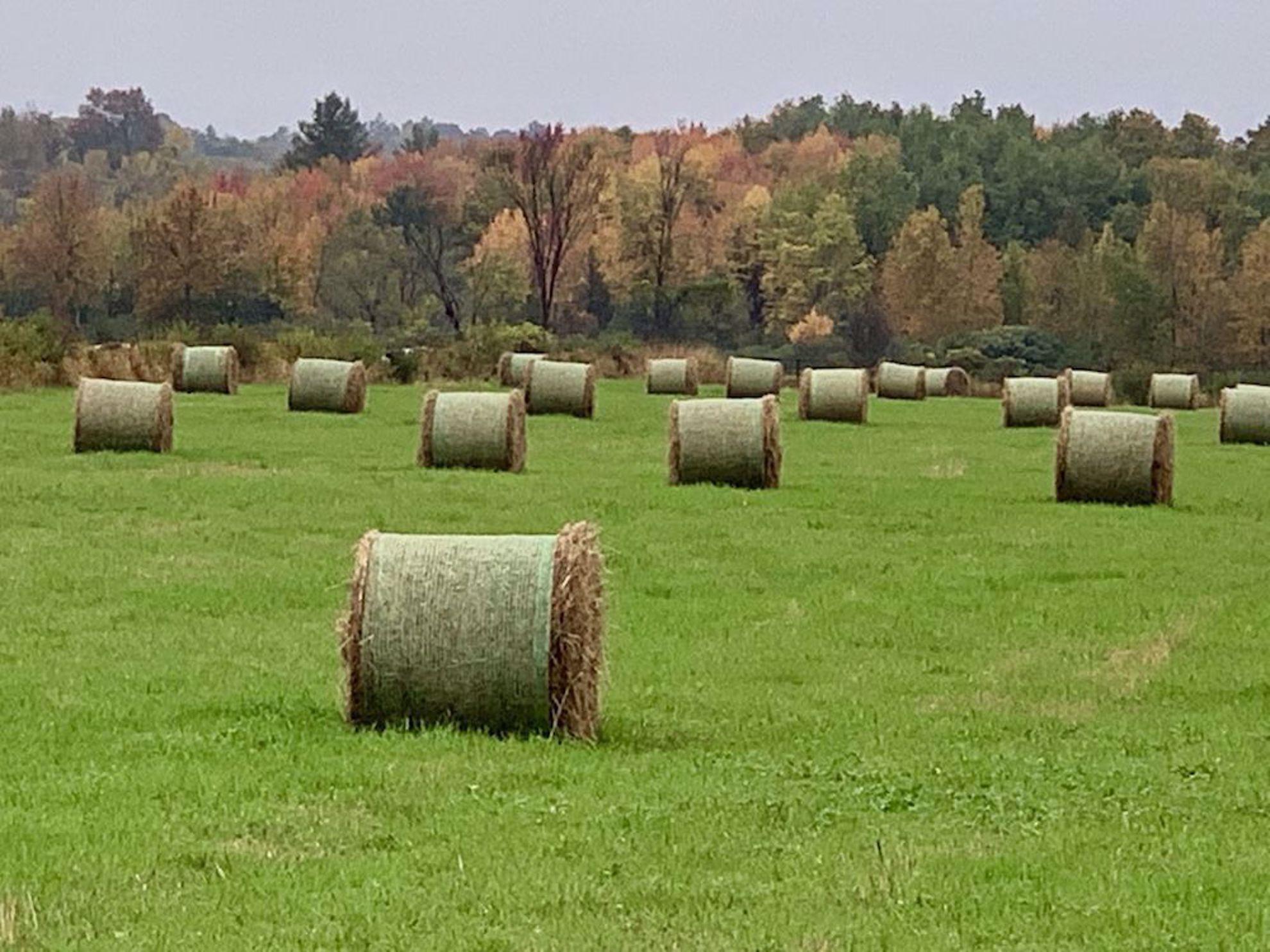 Hay bales and fall colors