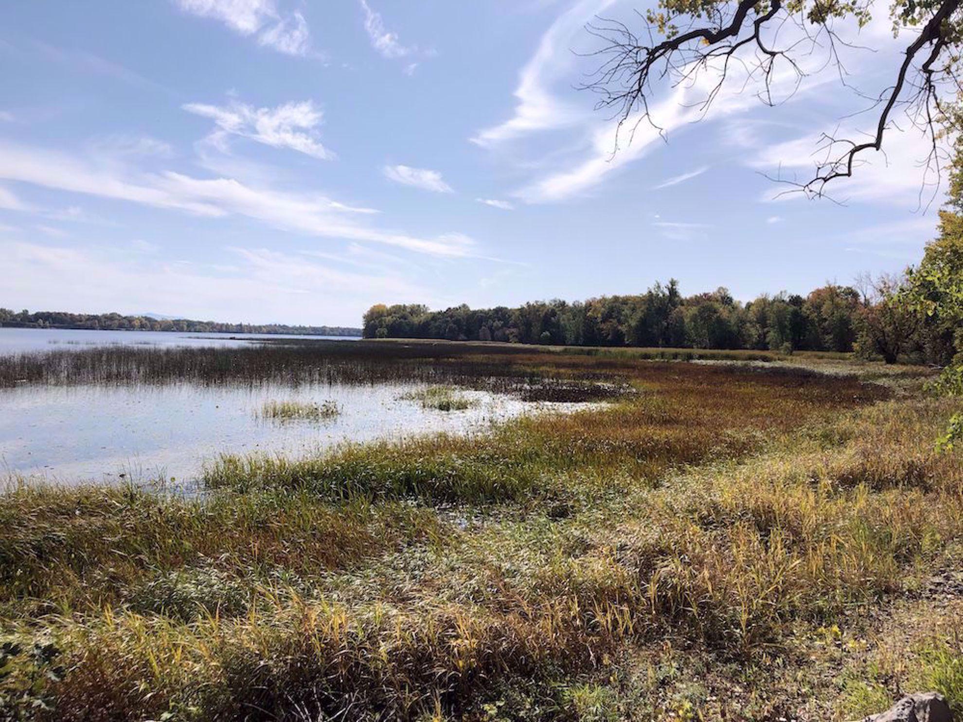 Fall marsh along the lake