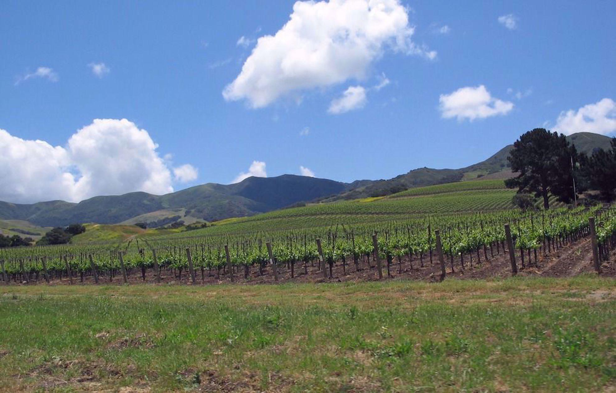 Vineyards near Santa Barbara